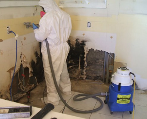 Proper Mold Remediation Methods